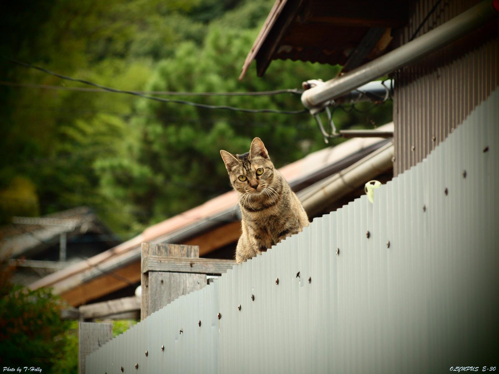 Ono06720110921